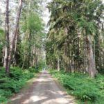 Radfahren, Ostsee und die Bernsteinküste 2.Tag